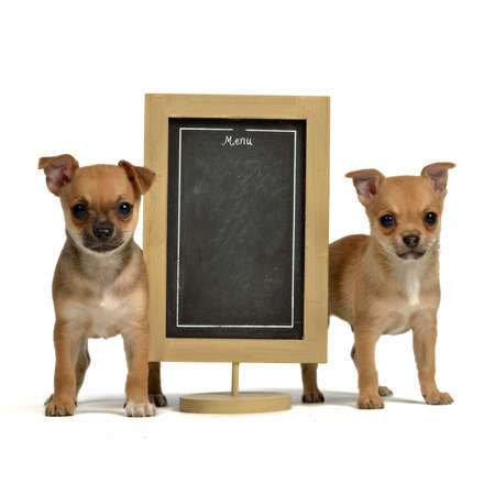 Two puppiea with menu blackboard, isolated on white background photo