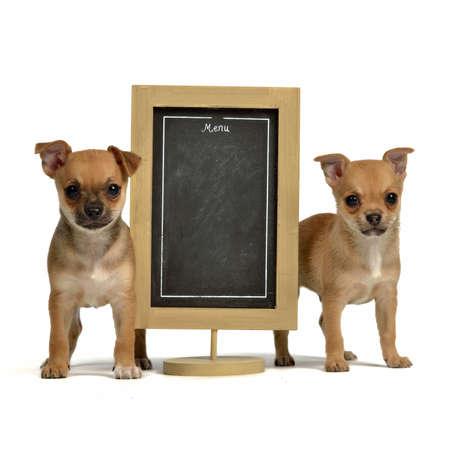 chiwawa: Two puppiea with menu blackboard, isolated on white background