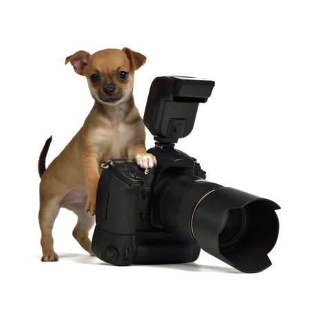 Chiuahua puppy with photo camera, isolated on white background