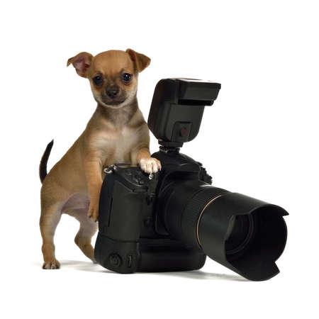 Chiuahua chiot avec appareil photo, isolé sur fond blanc