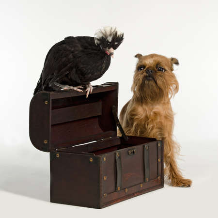 Old treasure chest with pirate bird and dog, studio shot photo
