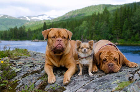 Three dogs at the mountain river bank, Finnmark, Norway photo