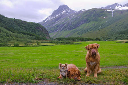 Funny pet band travelling about Norway photo