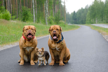 Three dogs sitting on a road in a forest photo