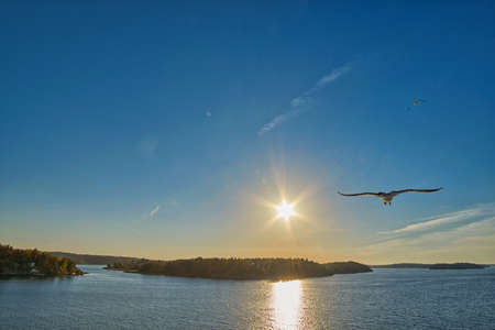 sea gull: Warm sunset with Sea Gull at one side Stock Photo