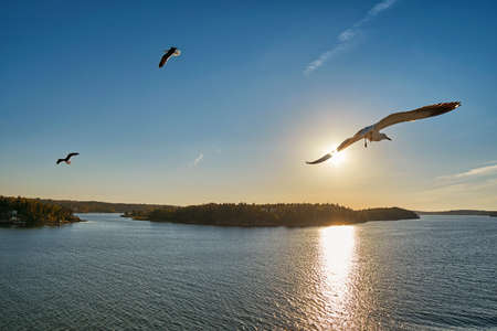 sea gull: Sea Gull flying into sunrays at Sea Stock Photo