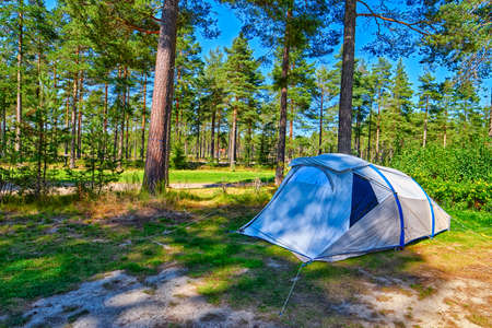 bivouac: Lonely Tent on a Pine forest Campsite Pitch