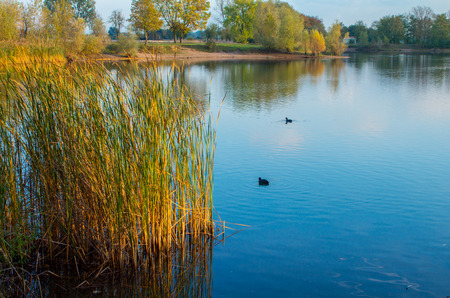 beautiful landscape of the lake and its inhabitants photo