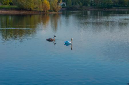 inhabitants: beautiful landscape of the lake and its inhabitants