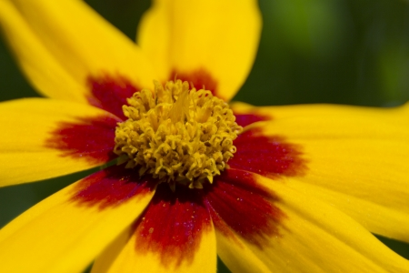 extreme close up of flowers with lens bokeh