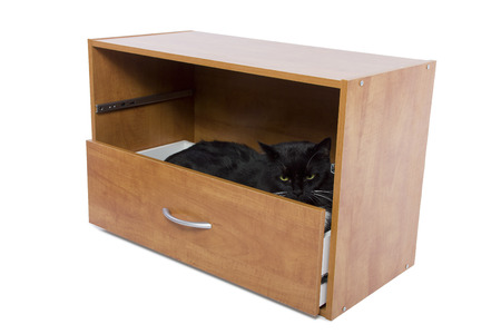 black cat hiding in an open drawer photo