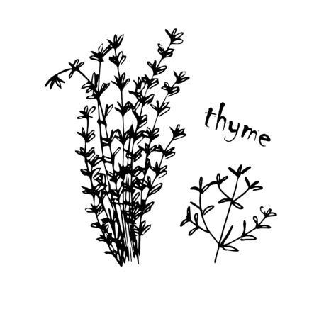 Vector set of herbs, spices, plants, seasoning kitchen silhouette on a white background, drawn black lines. Thyme