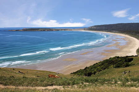 New Zealand Coastal Vista