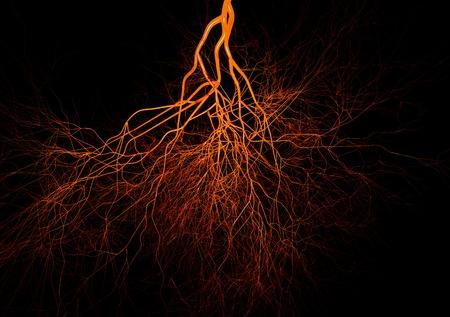 Nervous or blood system.  Medical illustration