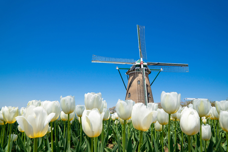 Tulips windmill 免版税图像