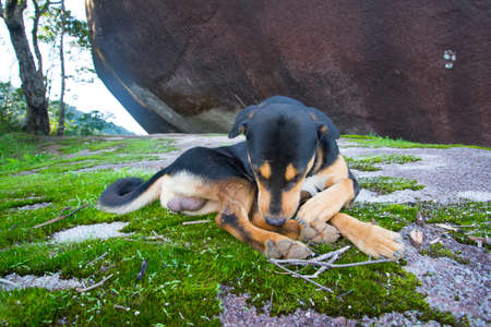 sleepy dog Banque d'images