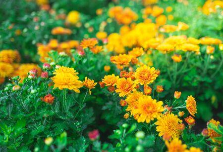 Bouquet of gerberas.Yellow and orange gerberas. Banque d'images - 138896247