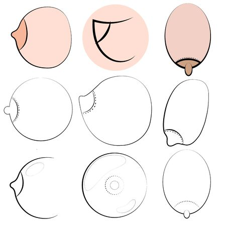 Types of womens Breasts. Womens Breast Icon, Breast Icon Vector