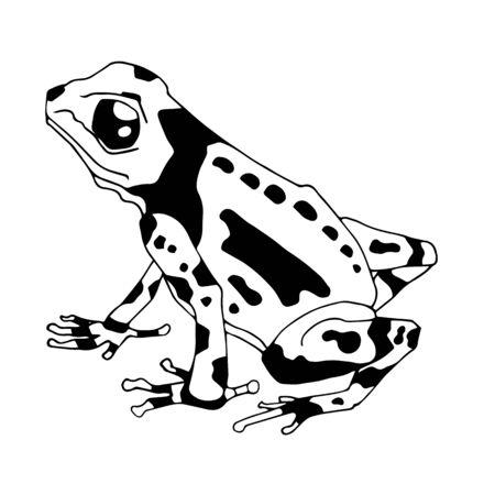 Illustration vectorielle isolée d'une grenouille tropicale empoisonnée. Dendrobatidés. Ranitomeya amazonica. Style de dessin animé plat. Vecteurs
