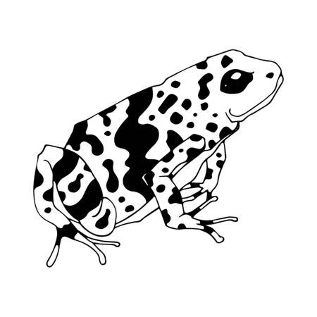 Isolierte Vektor-Illustration eines tropischen Pfeilgiftfrosches. Dendrobatidae