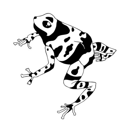 Isolated vector illustration of a tropical poison dart frog. Dendrobatidae . Ranitomeya amazonica. Flat cartoon style.
