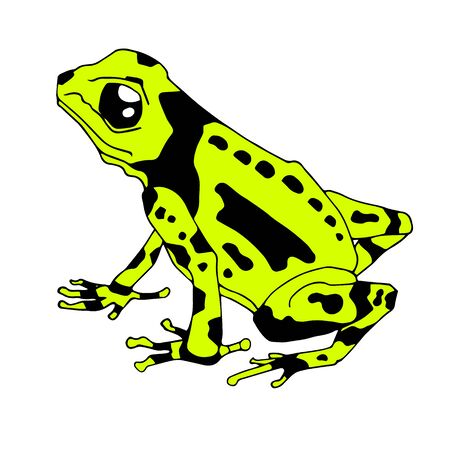 Frog cartoon tropical blue animal cartoon nature icon funny and isolated mascot character wild funny forest toad amphibian vector illustration. Duddle draw