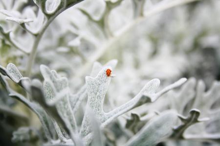 scrub grass: little bug Stock Photo