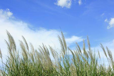 murk: A grass sky landscape