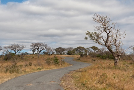 Road in savanna Stock Photo - 11020148