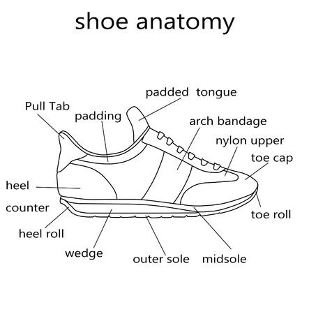 Illustratie - Raster Illustratie van de anatomie van een schoen