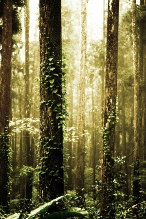 woodland  horror: image from nature background texture series