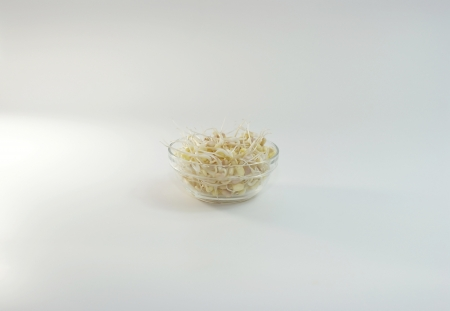 A bowl of mung bean sprouts Stock Photo - 19055849