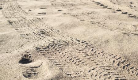 Quad tire tracks on sand  photo