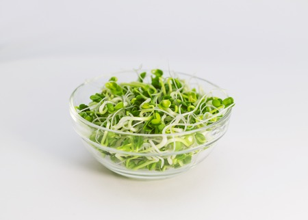 A bowl of alfalfa sprouts photo