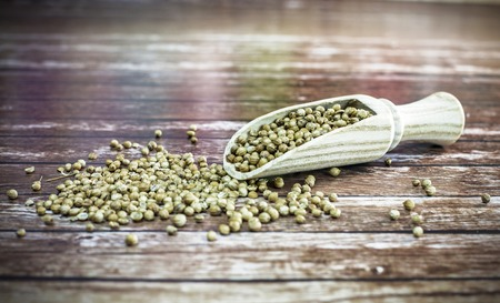 spicey: Dried whole coriander seeds on wooden spoon. Stock Photo