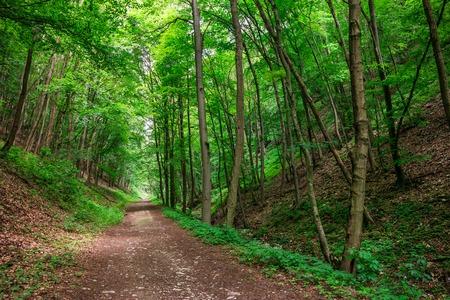 An enchanted forest path in Bukk National Park, Hungary. Zdjęcie Seryjne