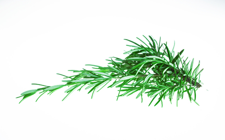 Sprig of fresh rosemary in white background. Zdjęcie Seryjne