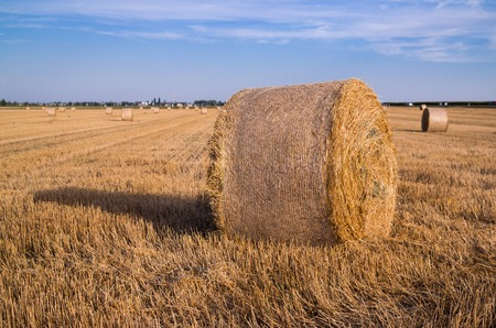 harvested: Harvested wheat field with a straw bale.