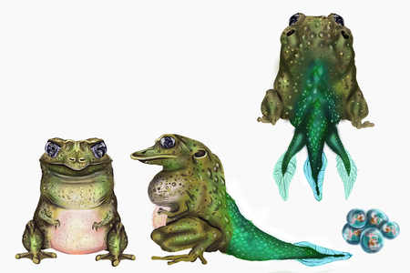 Fantastatic creature design, based on the anatomy of a toad, with its three views.