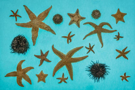 globular: Starfish and sea urchins isolated on a blue background.