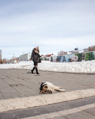 Orenburg, Russia, March 28, 2010. Spring. Sunny day. A homeless dog is basking in the sun on the background of a business lady squealing on business.
