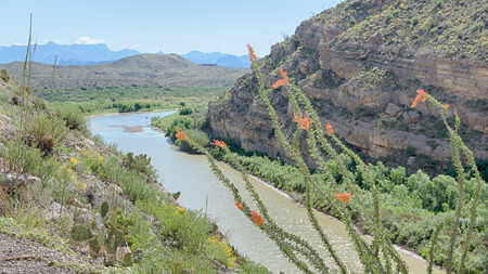 scenic drive: Blooming ocotillo at the entrance to Santa Elena Canyon with the Chisos Mountains in the background, on the Ross Maxwell Scenic Drive, in Big Bend National Park, Texas. The Rio Grande river is the border between the USA and Mexico.