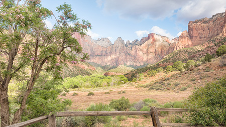 Clouds break over West Temple, Sundial, Altar of Sacrifice, and Tower of the Virgins, with a flowering New Mexico locust, in Zion National Park, Utah. Фото со стока - 43121922