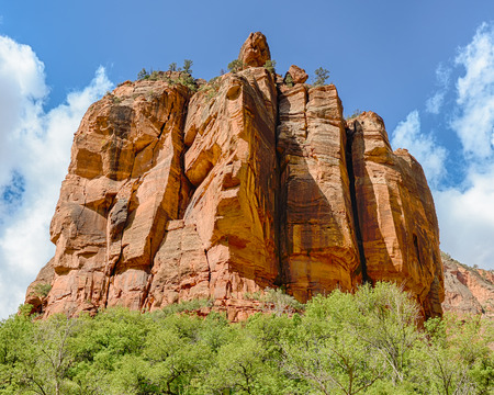 High Achievers; Trees perched on top of The Organ in the Big Bend area of Zion National Park, Utah.