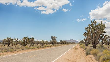 Joshua tree forest along Cima Road in the Mojave National Preserve, California. Фото со стока