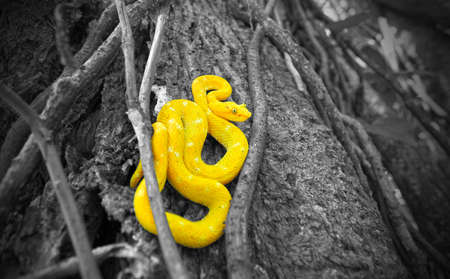 snake in a tree photo