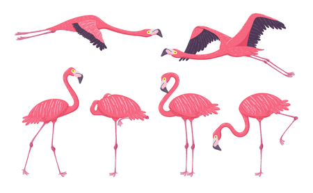 Pink Flamingo collection in different poses. Isolated elements on white background. Vector illustration.