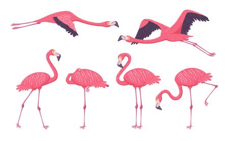 Collezione Pink Flamingo in diverse pose. Elementi isolati su sfondo bianco. Illustrazione vettoriale. Vettoriali