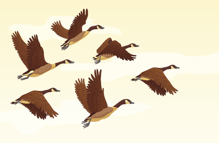 Flock of migrating geese flying. Migratory birds concept. Vector illustration.