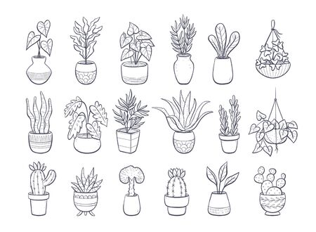 Collection of houseplants isolated on white background. Set of decorative indoor and office plants in pot.; Vector doodle plants illustration. Set 2 of 2.